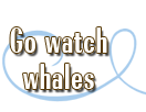 Go watch whales